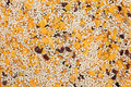 Gluten free muesli breakfast cereal forming a background Royalty Free Stock Image