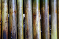 Glutinous rice roasted bamboo joints in burn cooking Stock Image