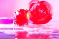 Glycerine soap with foam macro of of pink and violet Stock Images