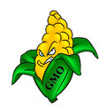 GMO corn Stock Photo