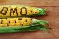 Gmo corn Royalty Free Stock Photo