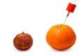 Gmo. Modified fruits Royalty Free Stock Photo