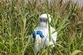 Profesionální zkoumání kukuřice těžký hřebec na
