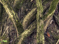 Gnarled Roots Stock Images