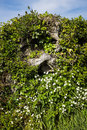 Gnarled tree stump in hedgerow a a Stock Photo