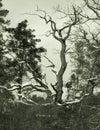 Gnarly retro b-movie tree Stock Photos
