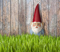 Gnome grass wood background a garden in a backyard setting with lawn and fence Royalty Free Stock Photography