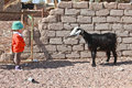 Goat and baby Stock Photography