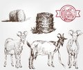 Goat breeding set of sketches made by hand Royalty Free Stock Photo