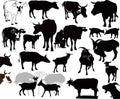 Cabra vaca ternero