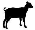 Goat detailed vector illustration of silhouette Stock Photography