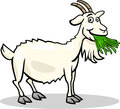 Goat farm animal cartoon illustration Royalty Free Stock Image