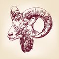 Goat hand drawn vector llustration realistic sketch Royalty Free Stock Image