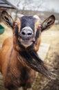 Goat photo taken on a face Stock Photos
