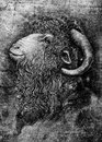 Goat or ram with large horns portrait