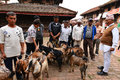 Goat sacrifice in kathmandu nepal oct people of preparing the goats for the animal for god durga durbar square during the Royalty Free Stock Photos