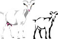 Goat white horned color and black illustrations Royalty Free Stock Image