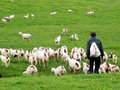 Goatherd Stock Photos