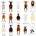 Goats chart with breeds name Royalty Free Stock Photo