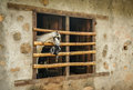 Goats in a window two looking out through farm building Stock Photography