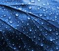 Gocce dell'acqua sul foglio blu della pianta Immagini Stock Libere da Diritti