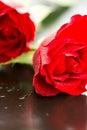 Gocce di acqua di macro delle rose rosse Fotografie Stock