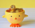 Going for a swim tiny duckling in duckie bowl Stock Image
