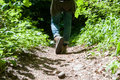 Going into the woods woman hiker Royalty Free Stock Photography