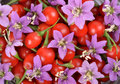 Goji berries fresh color tibetan Stock Image