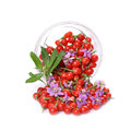 Goji berries fresh color tibetan in a glass container Stock Images
