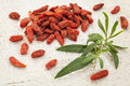Goji berry with a leaf dried tibetan berries wolfberry fresh on white rough wood surface Stock Image