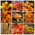 Gold autumn forest  details with mushroom Royalty Free Stock Photos