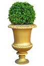 Gold ceramic pot with fresh bush Stock Photos