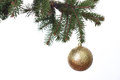 Gold Christmas balls on the green fir branch. White background. Royalty Free Stock Photo