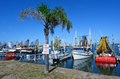 Gold coast fishermen s co queensland australia aus oct fishing trawlers mooring at operative since the selling their Royalty Free Stock Image