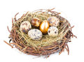 Gold egg eggs in nest from hay isolated on white Royalty Free Stock Photos