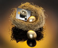 Gold eggs in nest Stock Photo