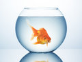 Gold fish in bowl Royalty Free Stock Photo