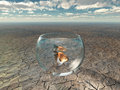 Gold fish in glass bowl in desert Royalty Free Stock Photo