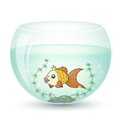 Gold fish goldfish in a cartoon style in the aquarium and algae Stock Photo