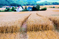 Gold land agricultur in europe Stock Image