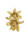 Gold lily Royalty Free Stock Photo