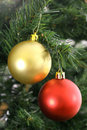 Gold & Red ornaments hanging on tree Stock Image