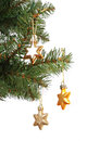 Gold stars on Christmas tree branch Royalty Free Stock Photos