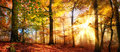 Gold sunrays in a misty autumn forest Royalty Free Stock Photo