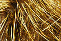 Gold tinsel Stock Images
