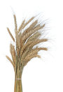 Gold wheat ears Stock Photos