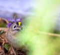 Goldcrest among the wood in the bottom circle Stock Photos