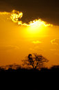 Golden African sunset Royalty Free Stock Image