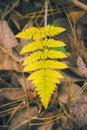 Golden Amber leaf macro - Yellow